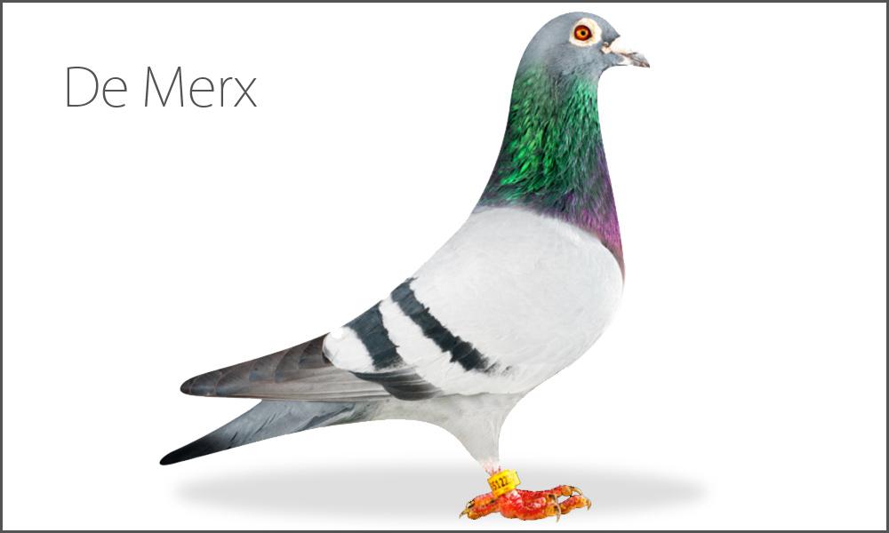 De Merx